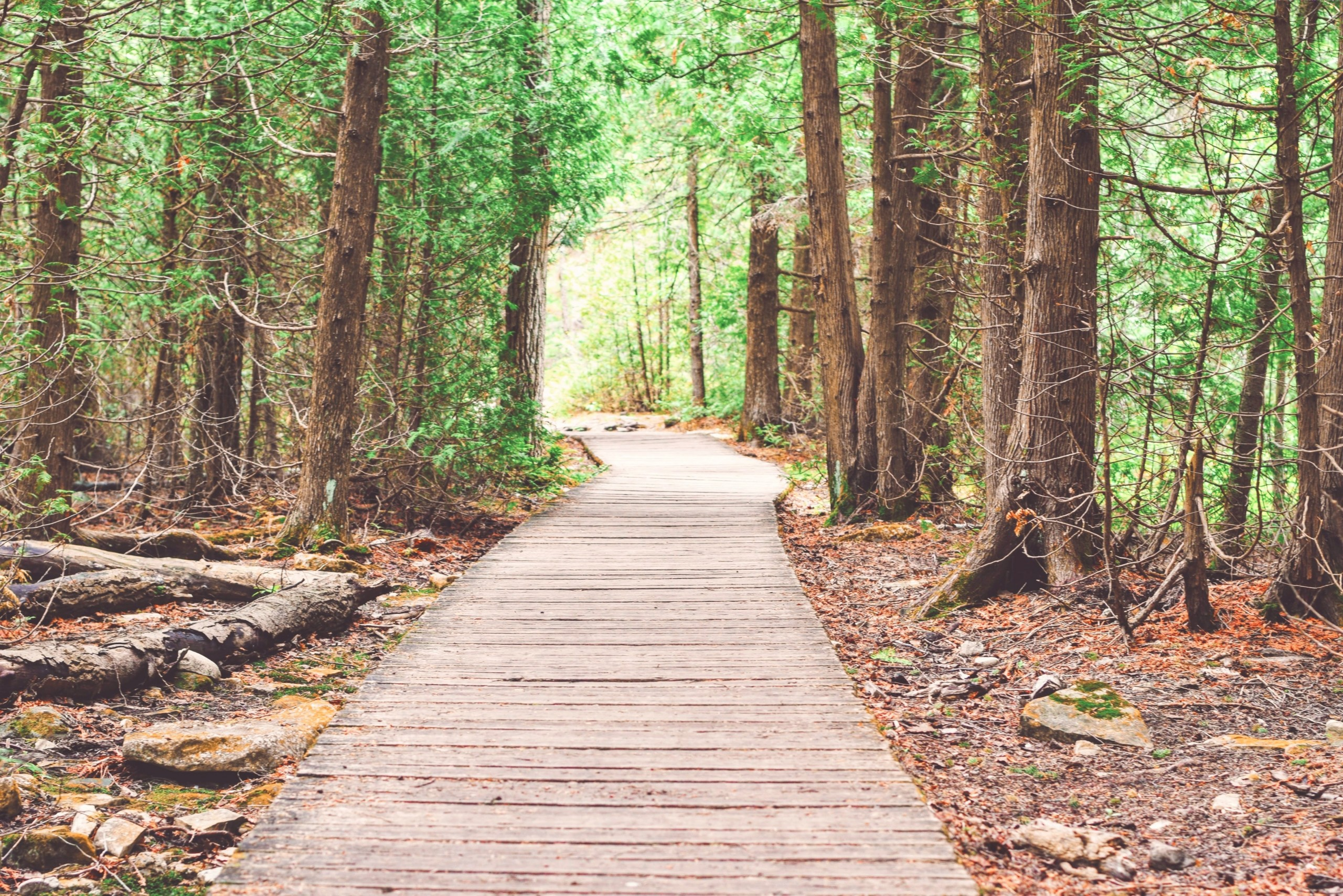 Boardwalk trail through forest.