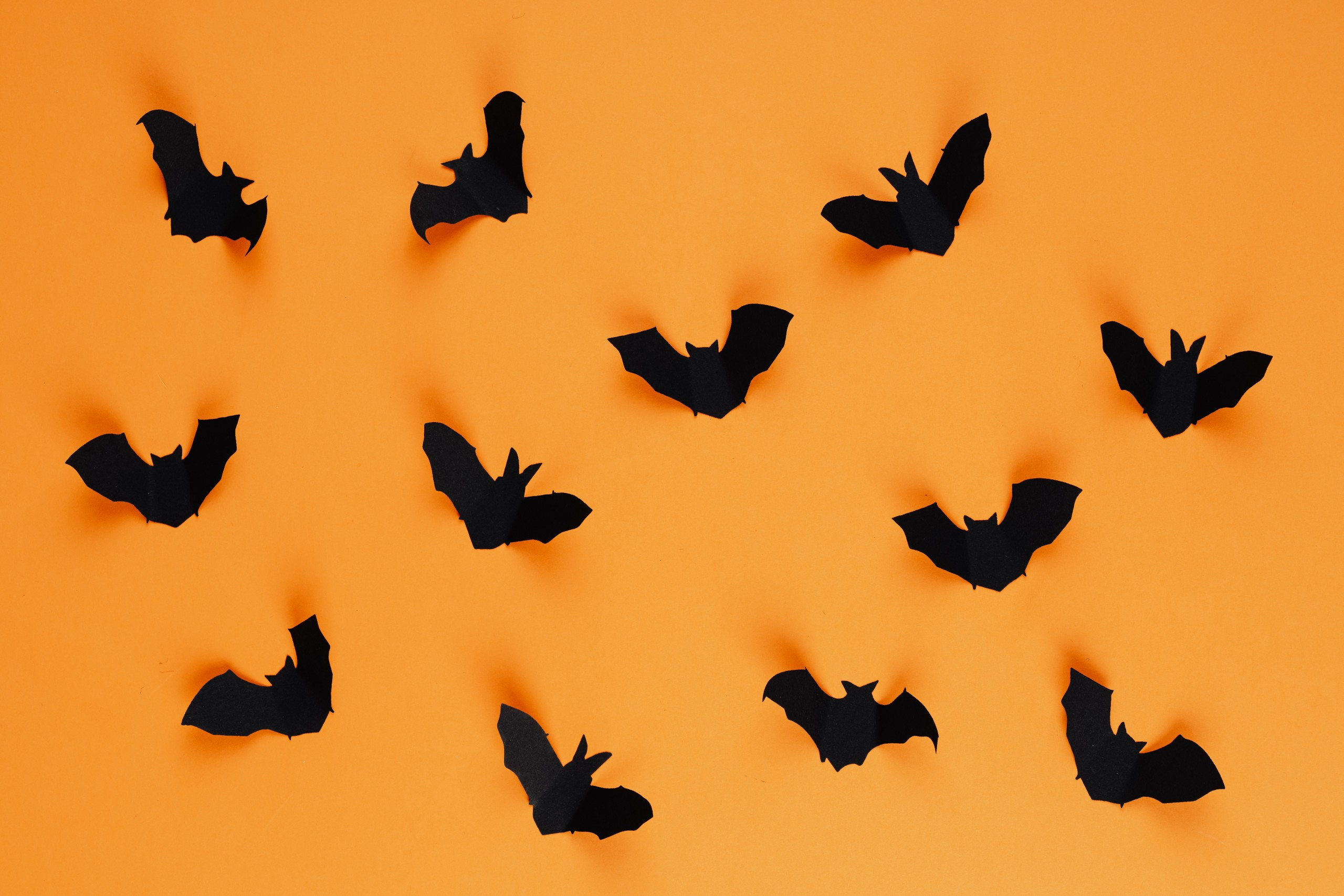Black Construction paper bats on orange background.