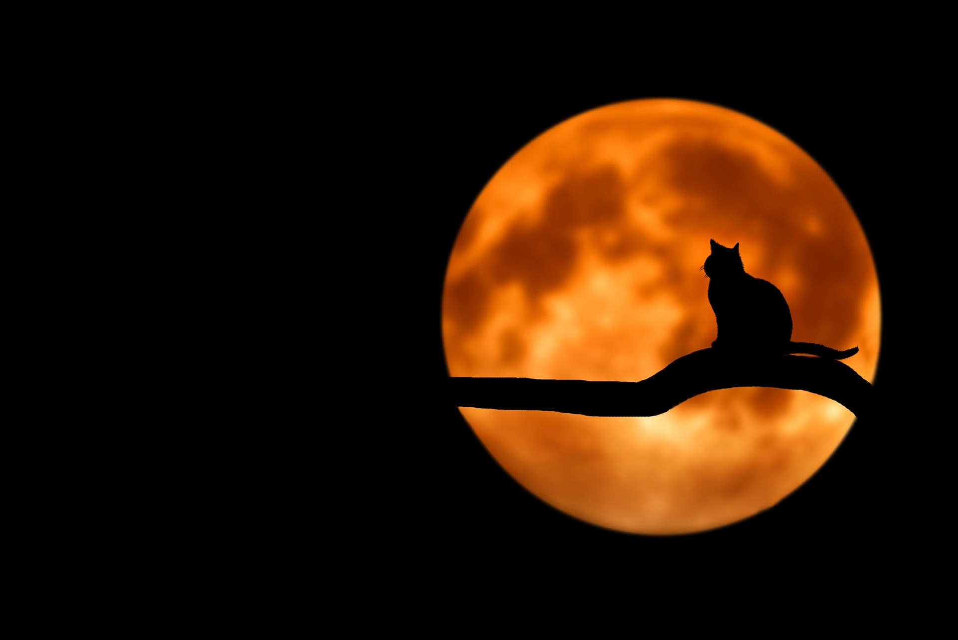 Silhouette of cat on branch with big orange moon in sky behind.